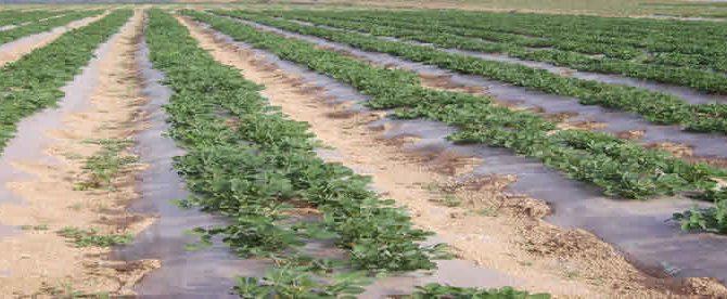 کاربردهای قیر در کشاورزی
